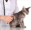 Ветеринарные клиники в Импилахти